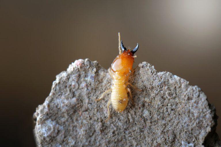 small termite on a rock