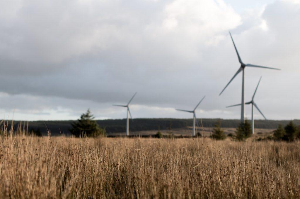 windmills in a field